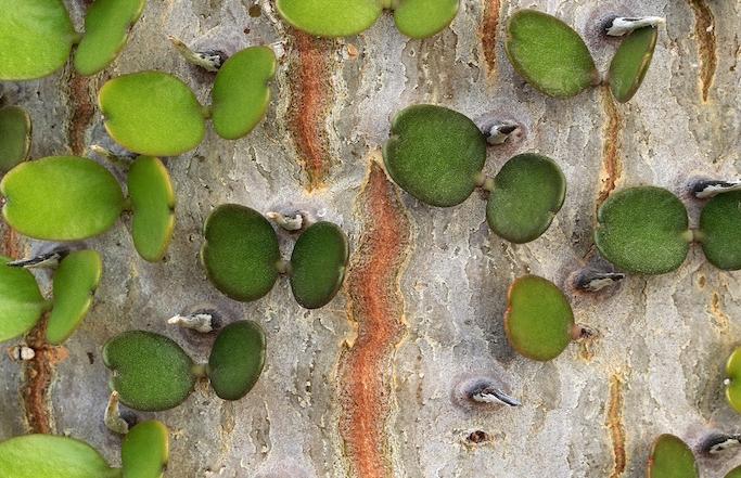 « De l'écorce au au jardin : le fabuleux monde des arbres » de Cédric Pollet du 1er mars au 26 avril 2017