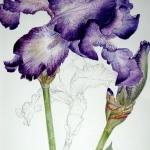 Arrêt sur nature, photos et aquarelles botaniques @ Abbaye Saint-André | Villeneuve-lès-Avignon | Occitanie | France