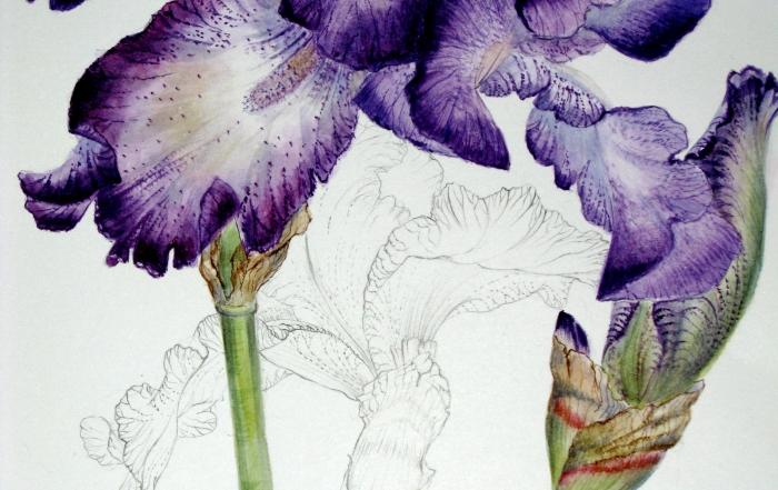 « Arrêt sur nature », photos et aquarelles botaniques du 29 avril au 5 juin 2017
