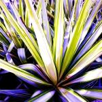 Jardin méditerranéen 1©Chantal Pommier Arrêt sur Nature