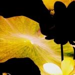 Jardins exotiques ©Chantal Pommier Arrêt sur Nature