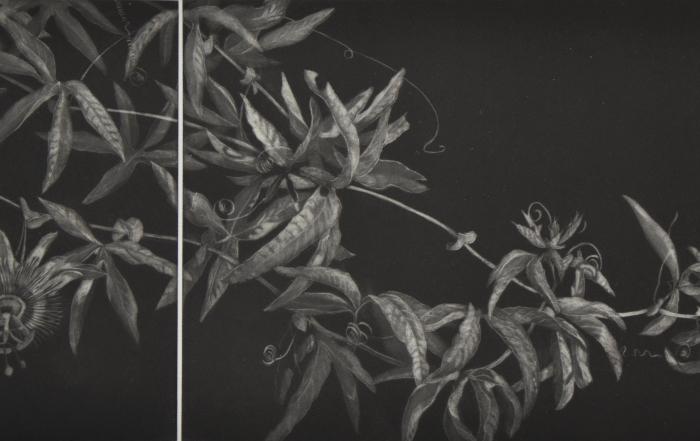 Exposition «Jardin en manière noire», par Judith Rothchild et Mark Lintott du 9 septembre au 1er novembre 2020