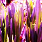 jardin enfantin - ©Chantal Pommier Arrêt sur Nature